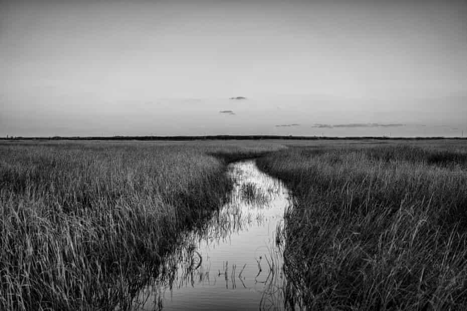 The Florida Everglades in Homestead, Florida.