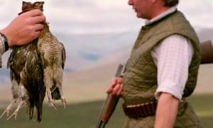 A brace of grouse shot on a highland estate