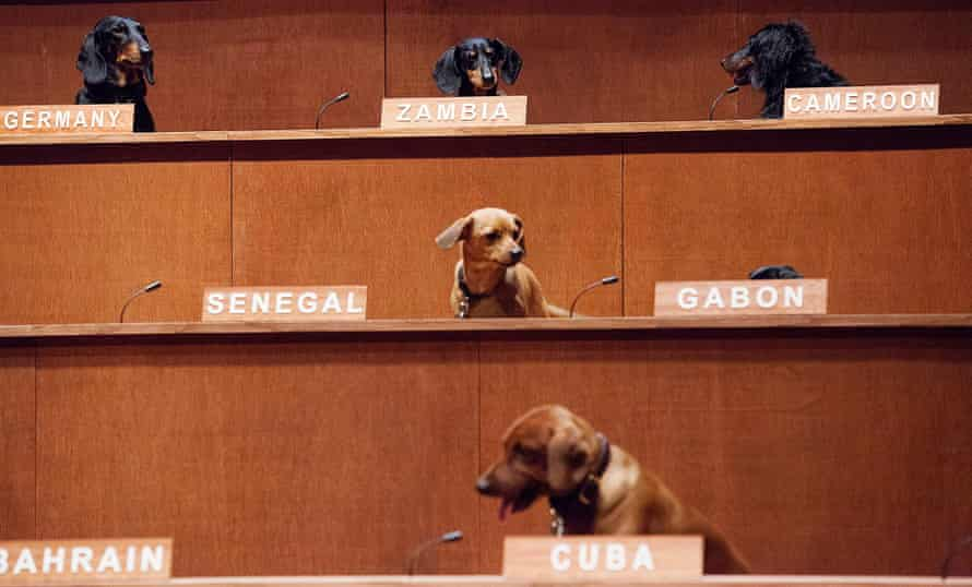 Dachshunds mimic United Nations delegates in Australian artist Bennett Miller's Dachshund UN.