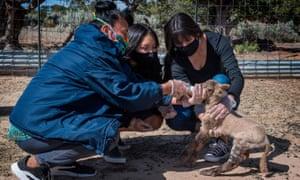 US-VIRUS-HEALTH-NAVAJO-ELDERSBeverly Gorman, a Navajo elder, feeds a newborn lamb with grandchild Nizhoni and daughter Naiyahnikai near the Navajo Nation town of Steamboat in Arizona on 23 May 2020.