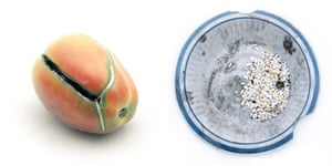 A tomato and a cracked food bowl containing a few grains of rice and some beans