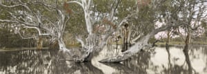 Nici Cumpston OAM Flooded Gum, Katarapko Creek, Murray River National Park 2007 watercolour and pencil on inkjet print on canvas 74.5 x 202.5 cm National Gallery of Victoria, Melbourne Purchased, Victorian Foundation for Living Australian Artists, 2008 © Nici Cumpston OAM