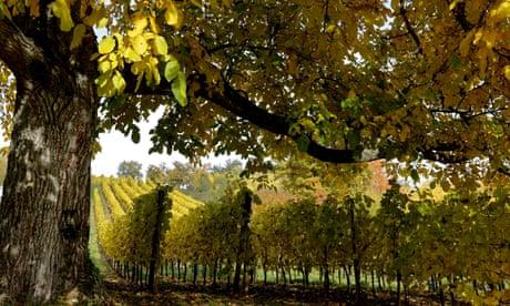 Alsatian wines with real bite