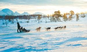 Husky dogs drag a sled through the snow