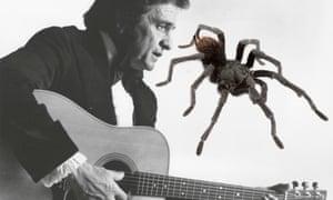 A tarantula has been named after Johnny Cash