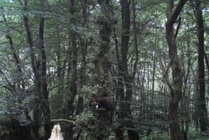 A still from John Hartshorne's video which shows a pine marten in Northumberland's Kielder forest.