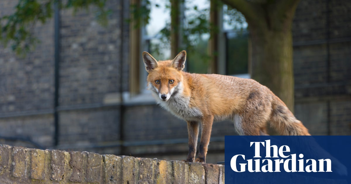 A flash of a badger, a brazen fox, an angry bull – why I love a really wild show