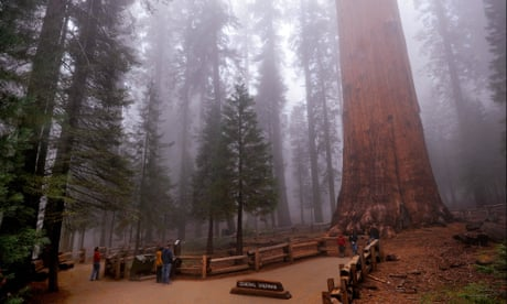 The General Sherman sequoia, the world's largest tree in Sequoia National Park