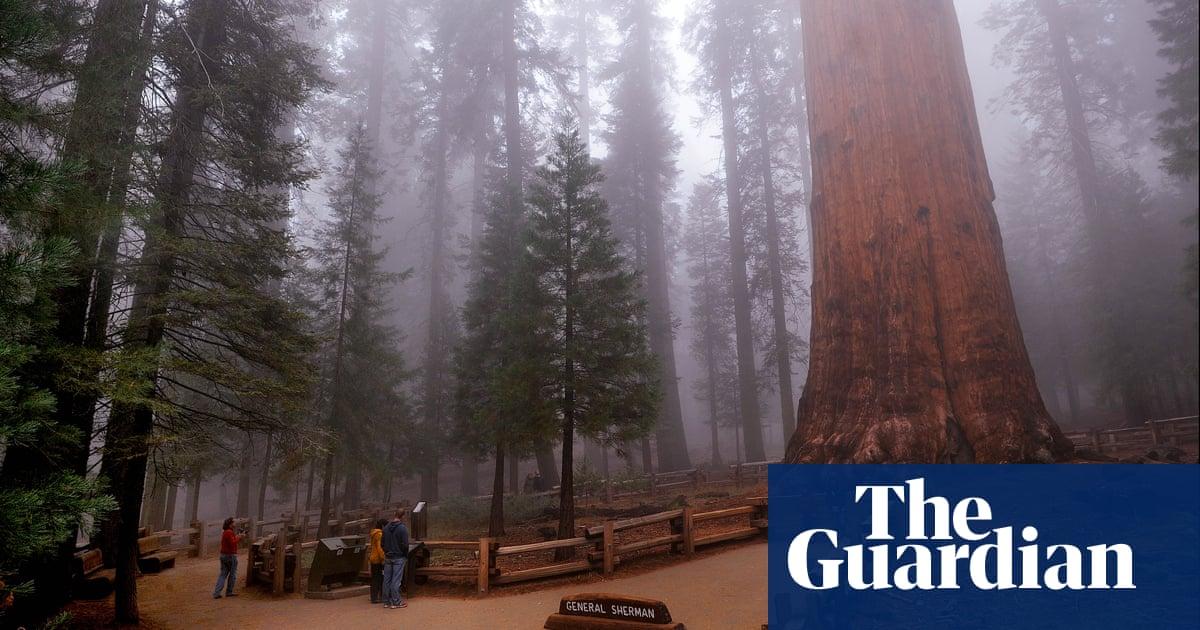 Wildfires in California threaten world's biggest tree – video