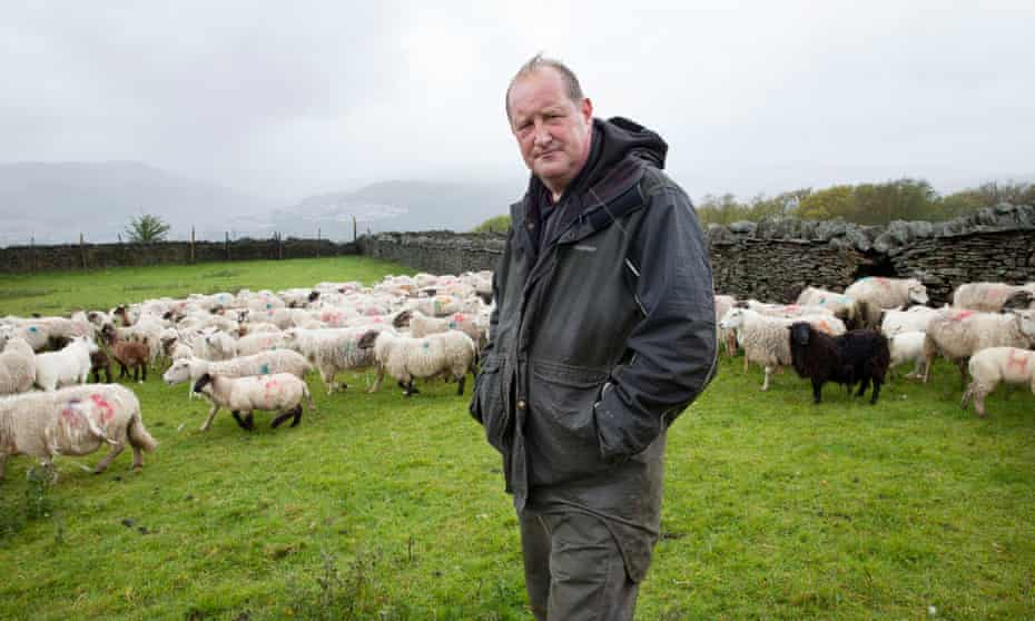 Jonathan Huntley standing in a field with a stone wall, hands in pockets, surrounded by a herd of sheep