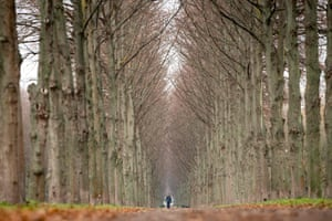 Hannover, GermanyA man walks his dog past trees in Herrenhausen gardens
