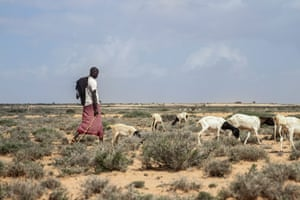 Mohamed Ismail and his herd