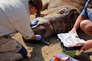 Dr Johan Marais treats Seha's open wound in Bela Bela, South Africa on 7 September