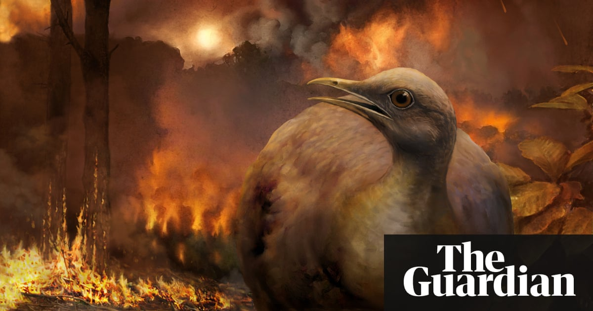 Birds had to relearn flight after meteor wiped out dinosaurs