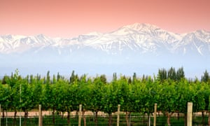 Rosy future for white wines: vineyards, Mendoza Province, Argentina.