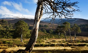 The stalking estate of Glenfeshie in the Cairngorms