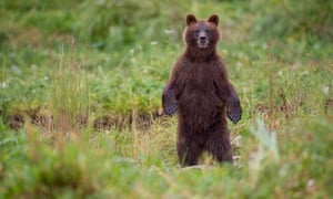 Rather than pushing over less sprightly friends, people facing an aggressive bear are advised to hold their ground and make noise to identify themselves as human.