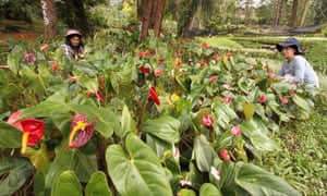 This photo taken on 28 October 2020 shows pulling weeds from a bed of plants at a park in Baguio City, north of Manila, as a spate of plant thefts from public parks in the city prompted authorities to tighten security and issue a plea for people to leave the greenery alone.