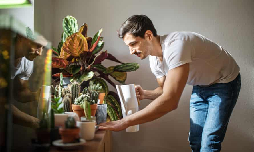 Man watering cacti plants in his living roomYoung man watering cacti plants in his living room. Man giving water to cactus plants at home.