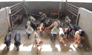 China produces half of the world's pork.