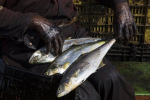 Covered head to foot in oil, fisherman Edward Alexander Barrios organises his freshly caught bass