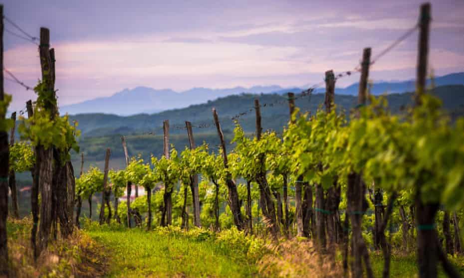 Slovenian sunset: vineyards in the Goriska Brda wine region.
