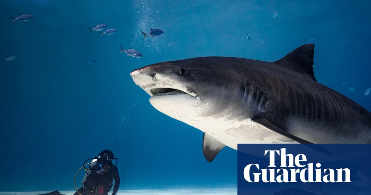 These Maldives islanders once saw sharks as the threat. Now they fear the plastic