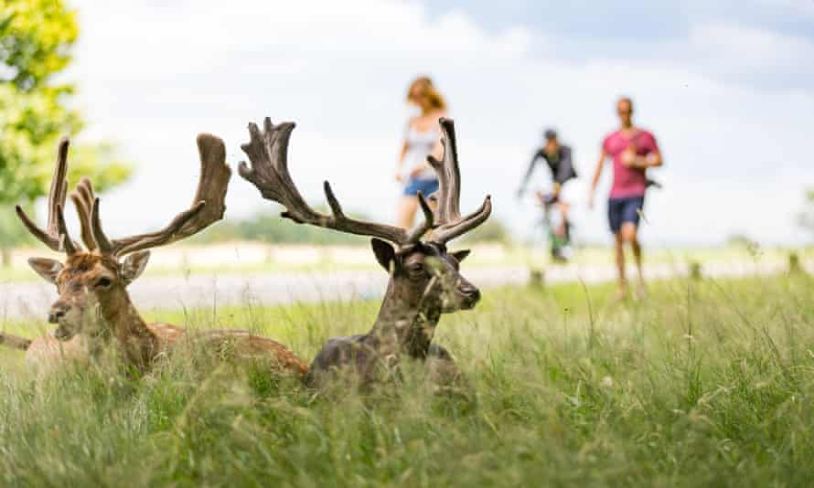 Richmond Park, London , UK on a sunny, summer dayGDKP1T Deer in Richmond Park, London , UK on a sunny, summer day