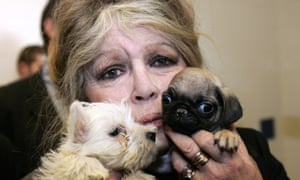 French actress Brigitte Bardot poses 28 December 2005 in Nice, with puppies seized by Alpes-Maritimes custom officers in a Hungarian van. The 143 puppies seized last 20 December were placed under sanitary surveillance following the announcement 23 December by French Agriculture minister Dominique Bussereau. AFP PHOTO VALERY HACHE (Photo credit should read VALERY HACHE/AFP/Getty Images)
