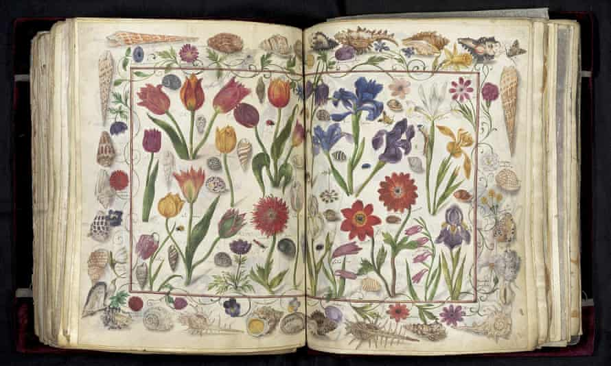 Flowers, shells and insects decorate a page in Das Großes Stammbuch.