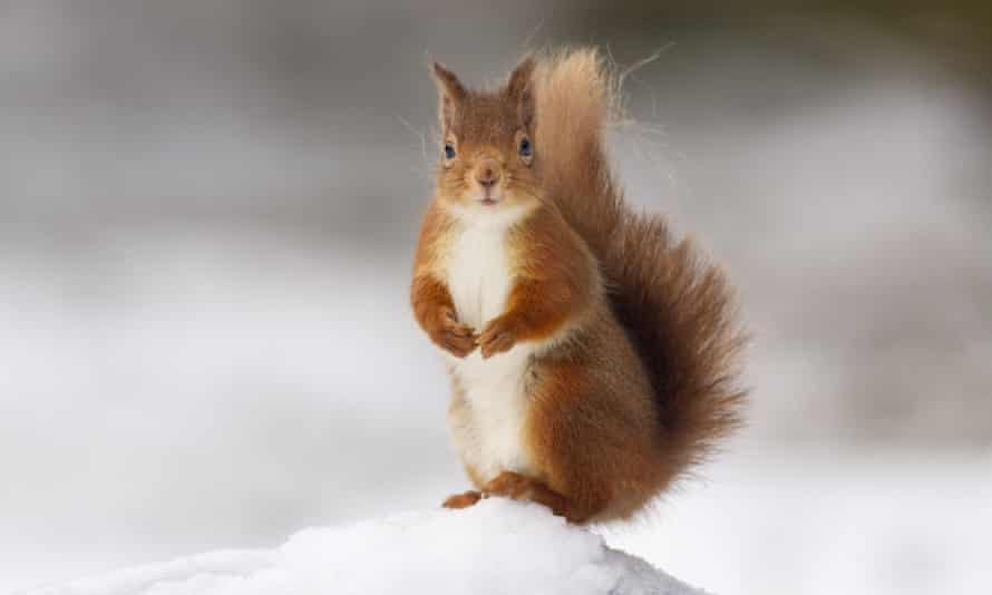 'A squirrel seems to want McKenzie's protagonist to think differently about her life.'