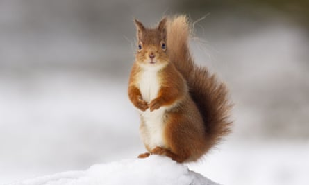 Squirrels were sometimes kept as pets, but their pelts and meat were highly valued.