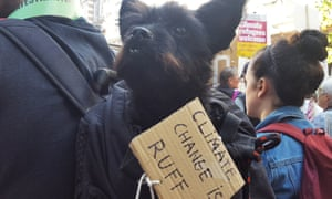 Rico is barking mad about the climate crisis in London.