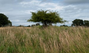 Poem of the week: Autumn by John Clare | Books | The Guardian