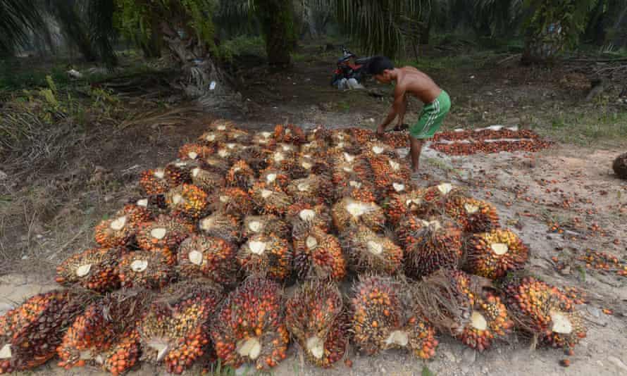 A palm plantation worker in Riau province