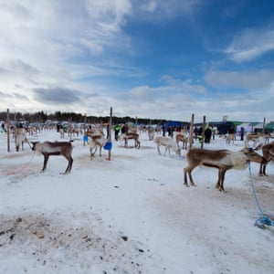 Fenced area to keep reindeers in one place before and after races.