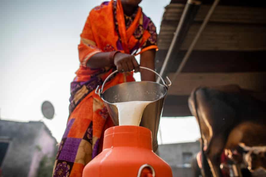 Dairy farmers prepare milk to deposit at Lakshmi Dairy in Karajgaon, Latur District, October 2020