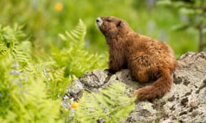 'No other nation can protect this group of all-Canadian species. Their conservation is completely up to Canadians,' said Dan Kraus.