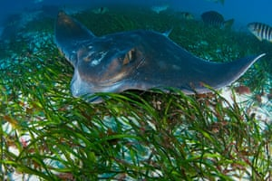 The map's compilers discovered that a single hectare of seagrass grown in southern Australia adds an additional 30,000 fish into a given bay or estuary every year