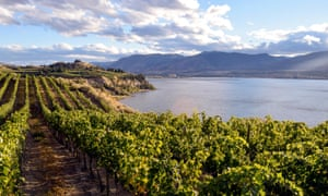 Vine living … the Okanagan Valley, despite winter cold snaps, has an ideal climate for grapes.