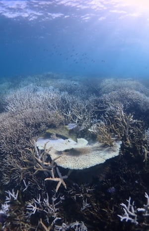 Coral bleaching at Heron Island, Queensland.