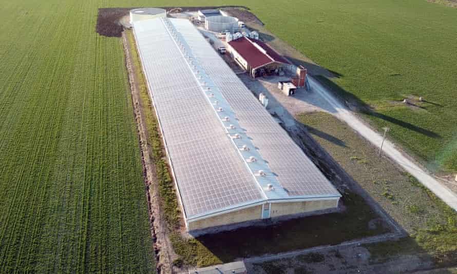 Allevamento Tenuta Vincenzo Srl pig factory farm in the small village of Cadelbosco