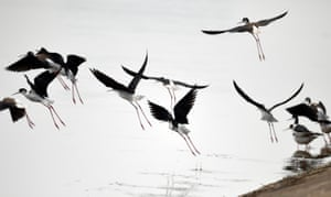 Water birds fly over the Shuimentang Lake in Huoqiu County, east China's Anhui province.