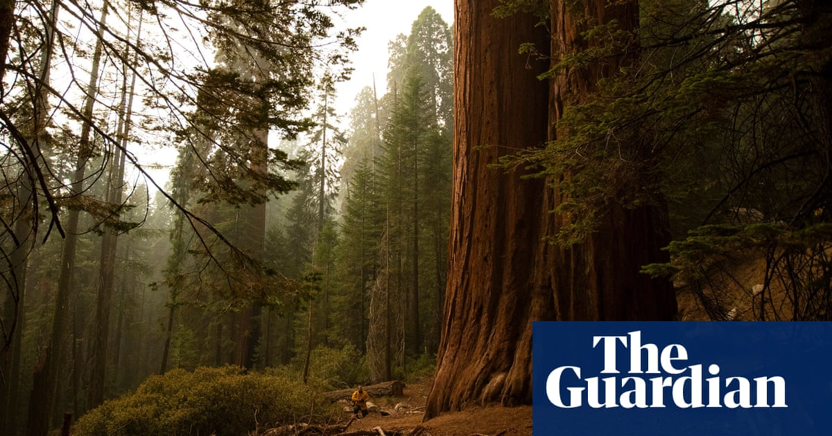 California wildfires burn into some groves of ancient giant sequoias