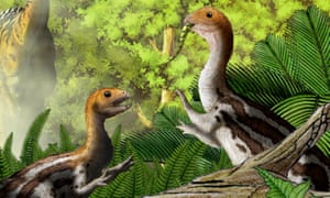 Limusaurus, which lived 160 million years ago, it hatched from its egg equipped with rows of small, sharp teeth. But as the creature matured into an adult all its teeth fell out, leaving only a beak-like set of jaws, a study has found.