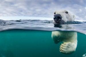 An underwater view of a polar bear (<em>Ursus maritimus</em>) swimming near Harbour Islands in Hudson Bay.