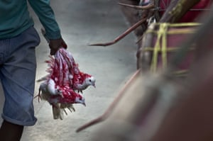 A Hindu devotee carries pigeons, smeared with blood and vermilion powder, for sacrifice during the two-day Deodhani festival at Kamakhya temple in Gauhati