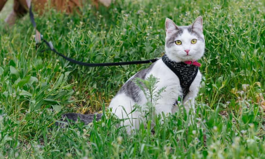 'Cats can be trained far more than we used to think', says vet Emma Hughes.