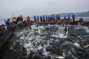 Zhejiang province, China Workers catch fish in Qiandao lake