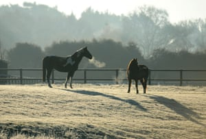 Horses stand in a frosty field near Pulborough, West Sussex